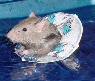 rat2btreading2bwater